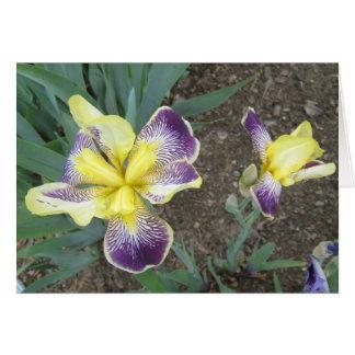 Lila gelbe Iris-Paar-kleine Anmerkungs-Karte Karte
