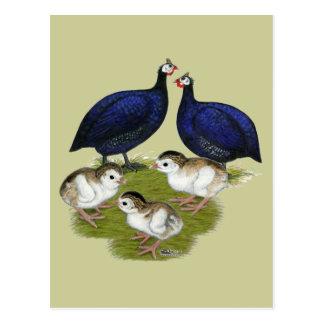 Lila Guinea-Familie Postkarte
