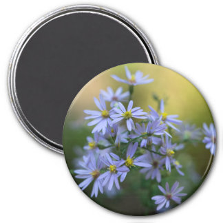 Lila Herbst-Aster-BlumenWildblume-Magnet Runder Magnet 7,6 Cm