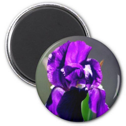 lila iris blume und seine bedeutung k hlschrankmagnet zazzle. Black Bedroom Furniture Sets. Home Design Ideas