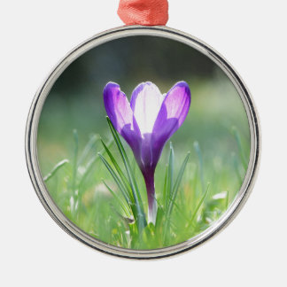 Lila Krokus in Frühling 03,3 Rundes Silberfarbenes Ornament