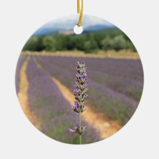Lila Lavendel stellt nahe Sault auf Keramik Ornament