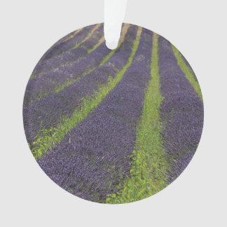 Lila Lavendel stellt nahe Sault auf Ornament