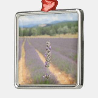Lila Lavendel stellt nahe Sault auf Silbernes Ornament