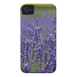 Lila Lavendelwiese iPhone 4 Cover