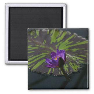 Lila Lotos-Wasserlilie-Lilien-Auflage-Magnet Quadratischer Magnet