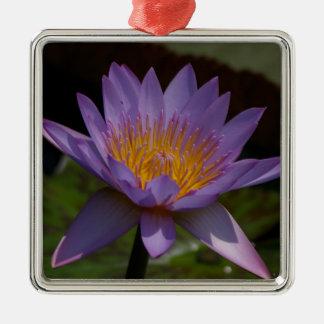 Lila Lotos-Wasserlilie Quadratisches Silberfarbenes Ornament