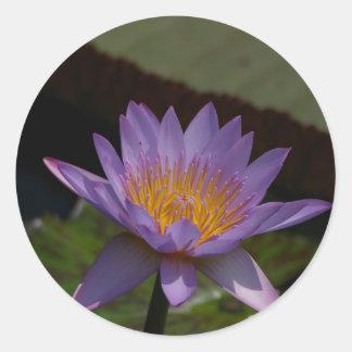 Lila Lotos-Wasserlilie Runder Aufkleber