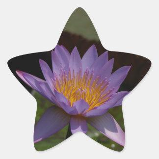 Lila Lotos-Wasserlilie Stern-Aufkleber