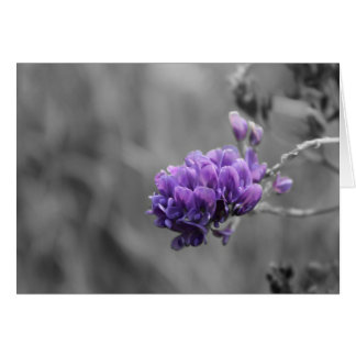 Lila Luzerne-Blüte auf Schwarzweiss Karte