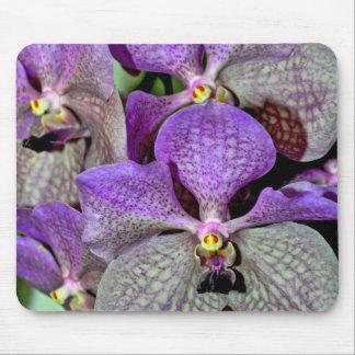 Lila Mottenorchideen-Blumen in der vollen Blüte Mousepad