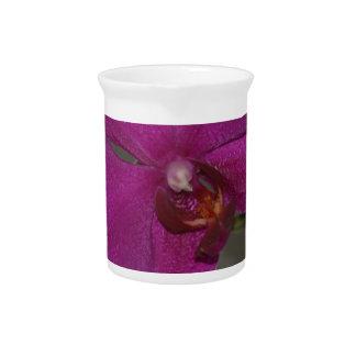 Lila Orchidee Krug