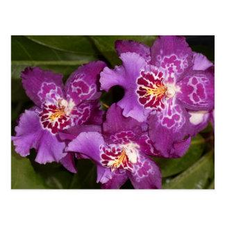Lila Orchidee Postkarte