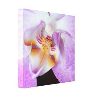 Lila Orchideen Leinwand Drucke