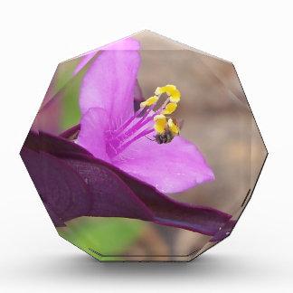 lila Pflanze nannte Spiderwort und eine kleine Auszeichnung