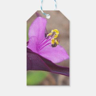 lila Pflanze nannte Spiderwort und eine kleine Geschenkanhänger