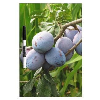 Lila Pflaumen, die am Baum hängen. Toskana, Trockenlöschtafel