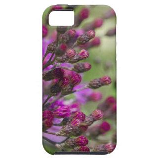 Lila riesige Ironweed-Wildblume-Knospen Etui Fürs iPhone 5