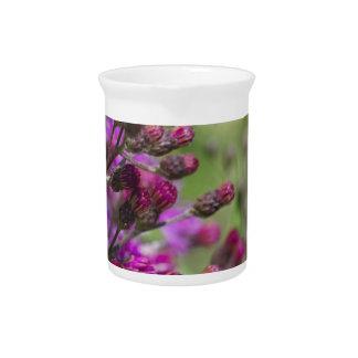 Lila riesige Ironweed-Wildblume-Knospen Getränke Pitcher