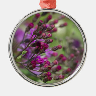 Lila riesige Ironweed-Wildblume-Knospen Silbernes Ornament