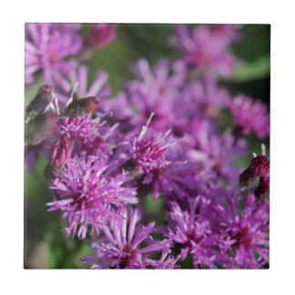 Lila riesige Ironweed-Wildblumen Keramikfliese