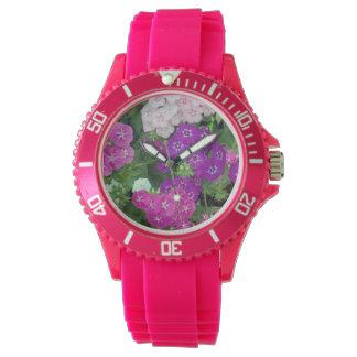 Lila rosa süßer Williams, Uhr