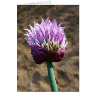 Lila Schnittlauch-Blume in der Blüte Karte