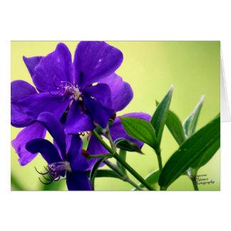 Lila Schönheits-Blume (5,0) Karte
