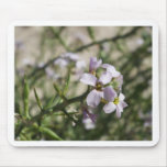 lila Strand-Blume