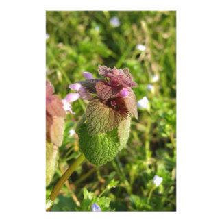 Lila Tot-Nessel (Lamium purpureum) auf Grün Briefpapier