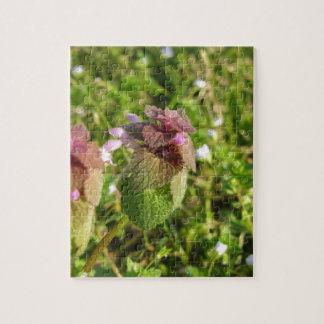 Lila Tot-Nessel (Lamium purpureum) auf Grün Puzzle