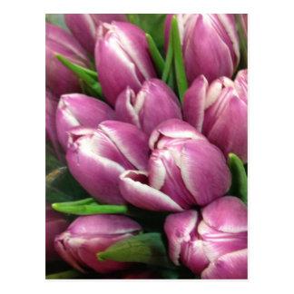Lila Tulpe-Blumen Postkarte