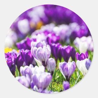 Lila Tulpen Aufkleber und Umschlag Aufkleber