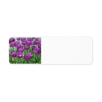 lila Tulpen für immer