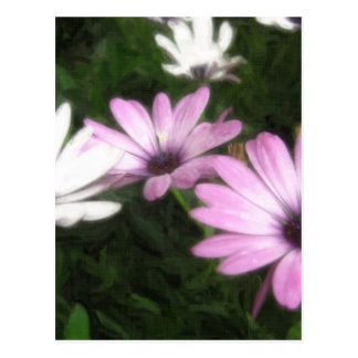 Lila und weiße Gänseblümchen 1 Painterly Postkarte