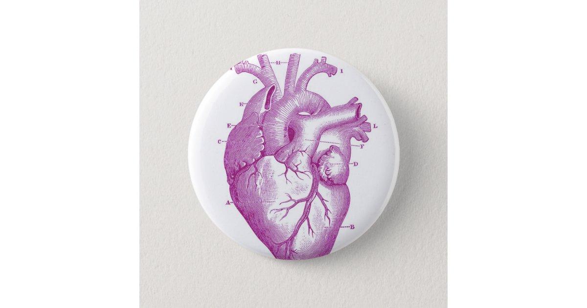 Ungewöhnlich Herzanatomie Und Funktion Galerie - Anatomie Ideen ...