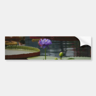 Lila Wasserlilie Autoaufkleber