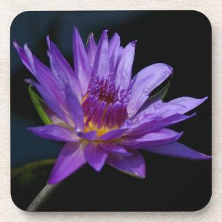 Lila Wasserlilie-Lotos Getränkeuntersetzer