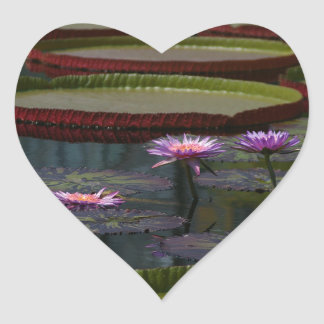 Lila Wasserlilie-Lotos Herz-Aufkleber