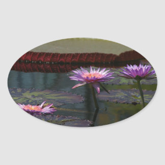 Lila Wasserlilie-Lotos Ovaler Aufkleber