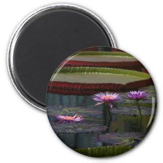 Lila Wasserlilie-Lotos Runder Magnet 5,1 Cm