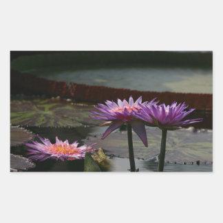 Lila Wasserlilie-Lotosaufkleber Rechteckiger Aufkleber