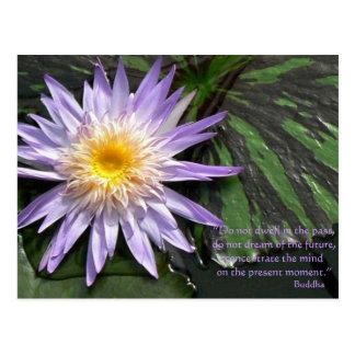 Lila Wasserlilie mit Lilypads Postkarten