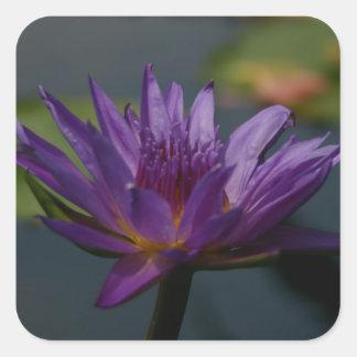 Lila Wasserlilie Quadratischer Aufkleber