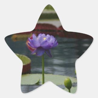 Lila Wasserlilie Stern-Aufkleber