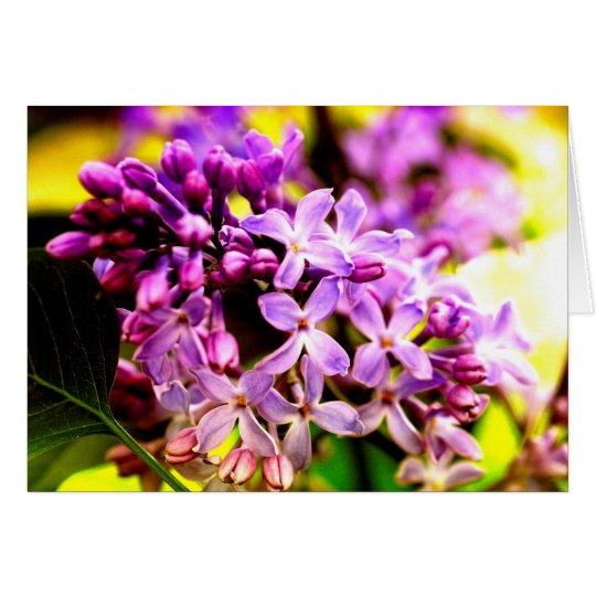 Lilac macro karte