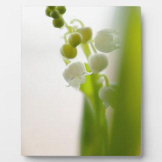 Lilie der Tal-Blume Fotoplatte