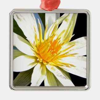Lilie des weißen und gelben Wassers Quadratisches Silberfarbenes Ornament