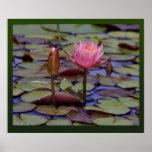 Lilien-Auflage-Foto verfügbare druckt -24x20-other Poster