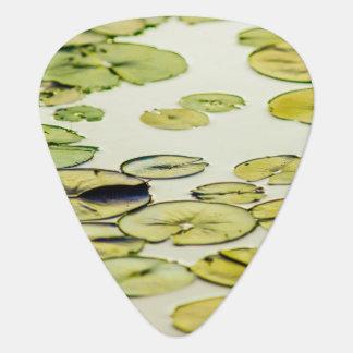 Lilien-Auflagen in einem Teich Plektron